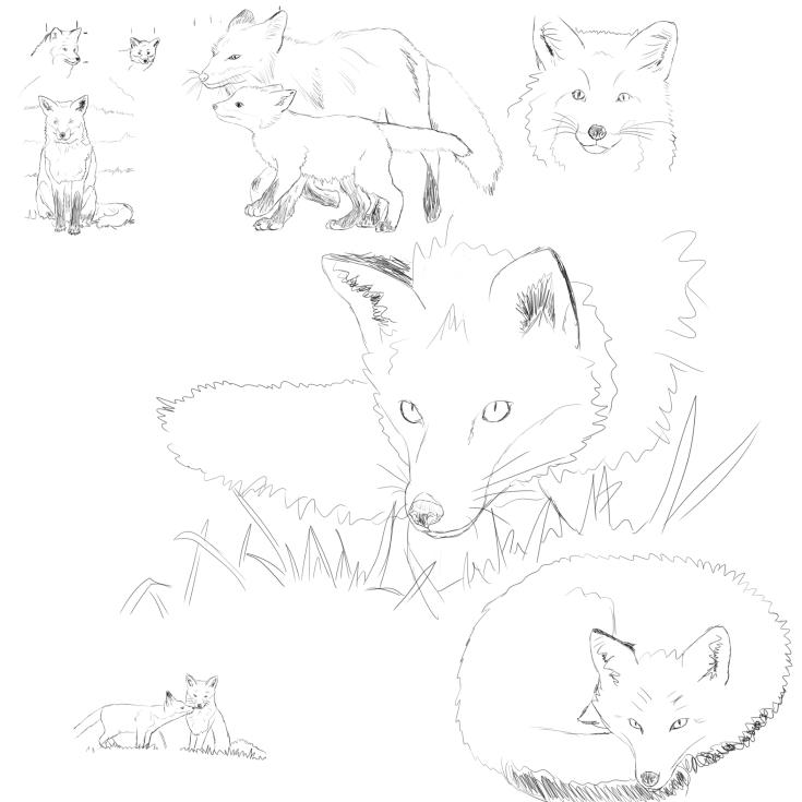 Pratique de renards
